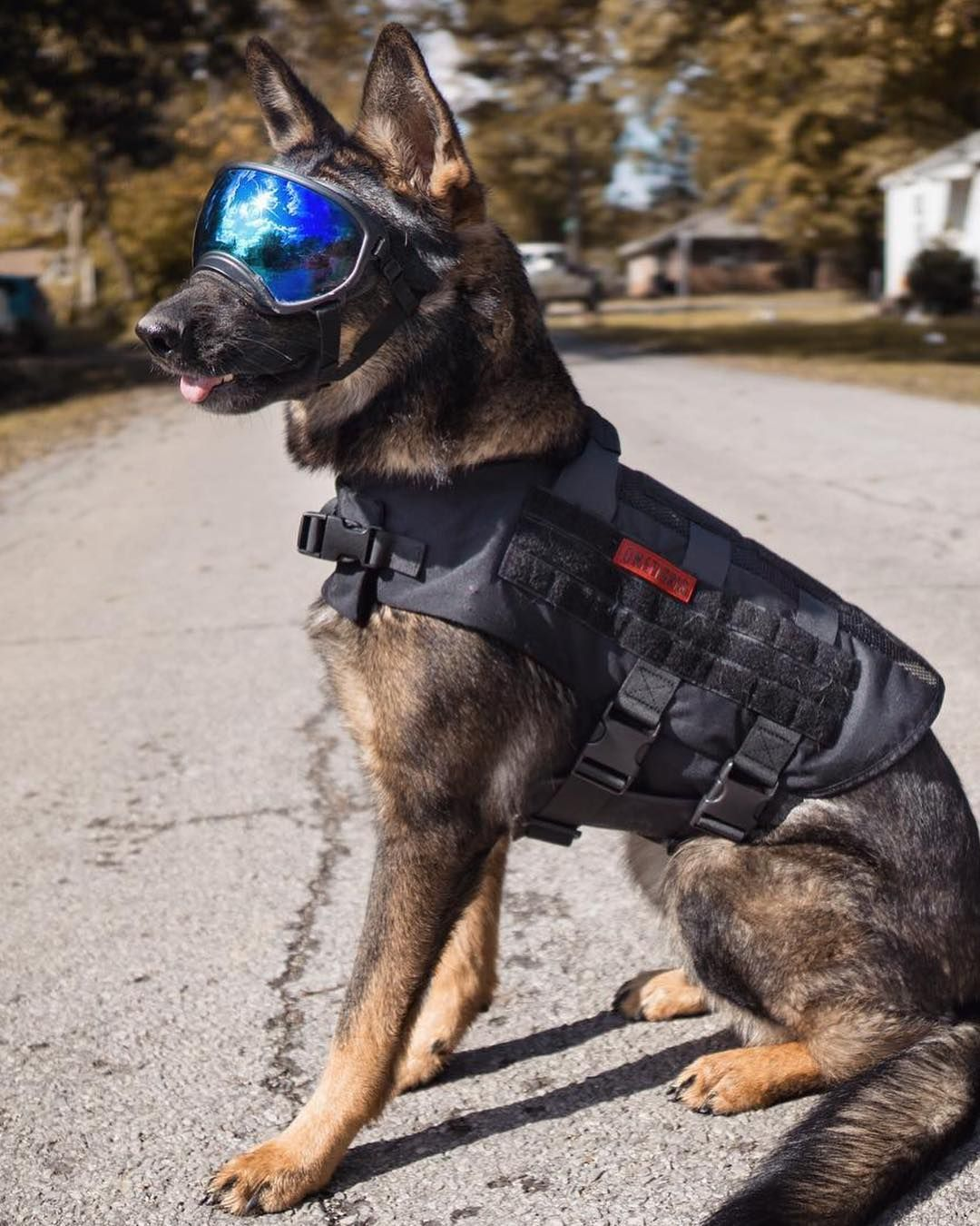I M The Coolest K9 On The Block With My New Submariner Dog Harness