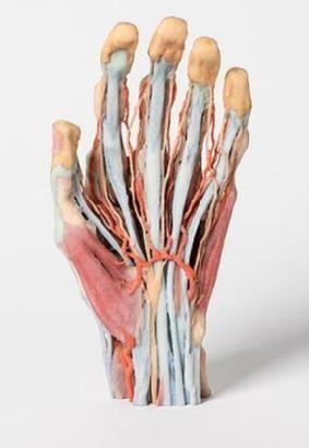 cadaver hand.jpg
