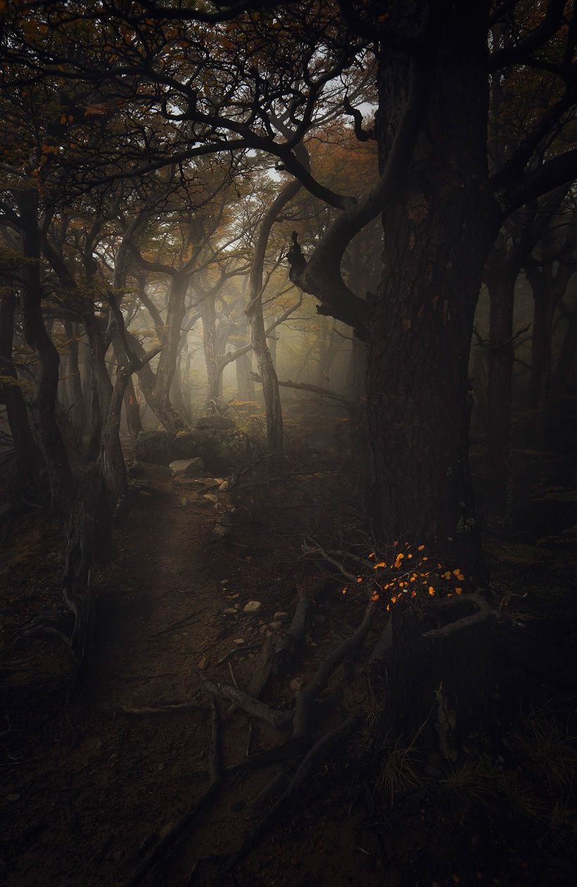 Enter Forest Of Souls By Alexandre Deschaumes Wandering Into - Stunning landscape photography by alexandre deschaumes