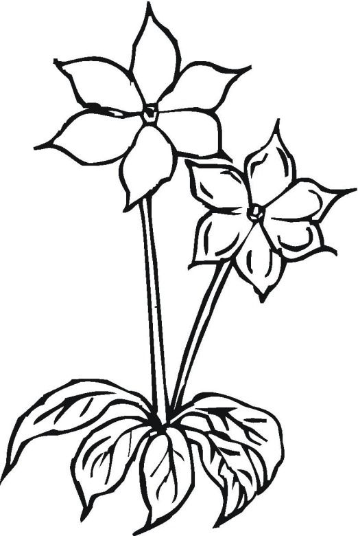 Flower Coloring Pages That You Can Print Rhpinterest: Coloring Pages Of Flowers That You Can Print At Baymontmadison.com