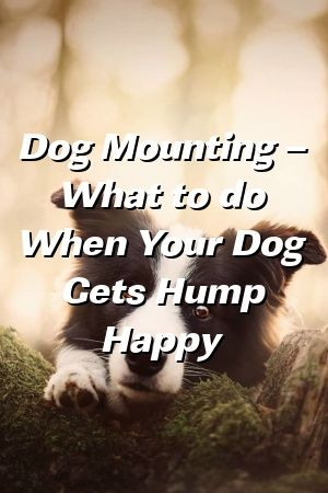 Chloe Piper Tells About Dog Mounting – What to do When Your Dog Gets Hump Happy  #пекинес   #Dogbreeds  #largedogsforapartments  #Daschund #WestHighlandTerrier  #pets  #puppynames #dogs
