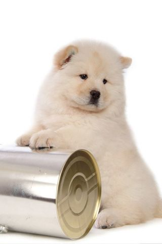 Cute Chow Chow Dog Chow Chow Puppy Chow Chow Dogs Dogs