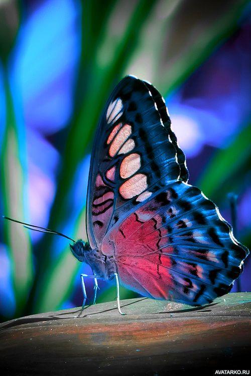 Красивая разноцветная бабочка сидит — Авы и картинки в ...