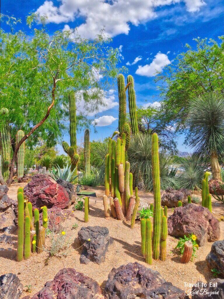 ecd5904f87f0d7e3ffbb449cea800333 - Botanical Cactus Gardens Las Vegas Nv
