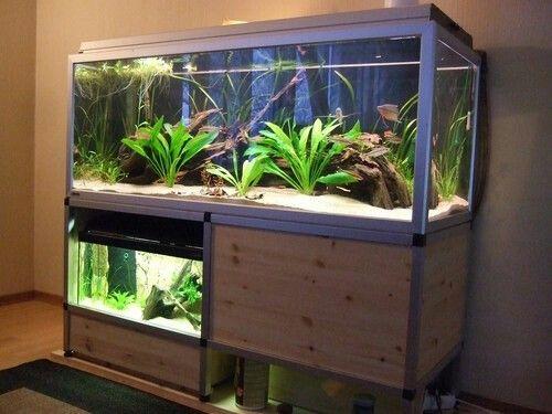 Fin Reol Aquarium Fish Tank Aquarium Fish Fish Tank Stand