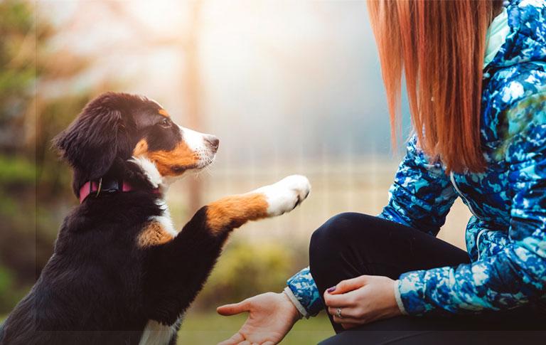 Pet Insurance Vs Pet Wellness Trupanion Pet Insurance Wellness Plan Pets