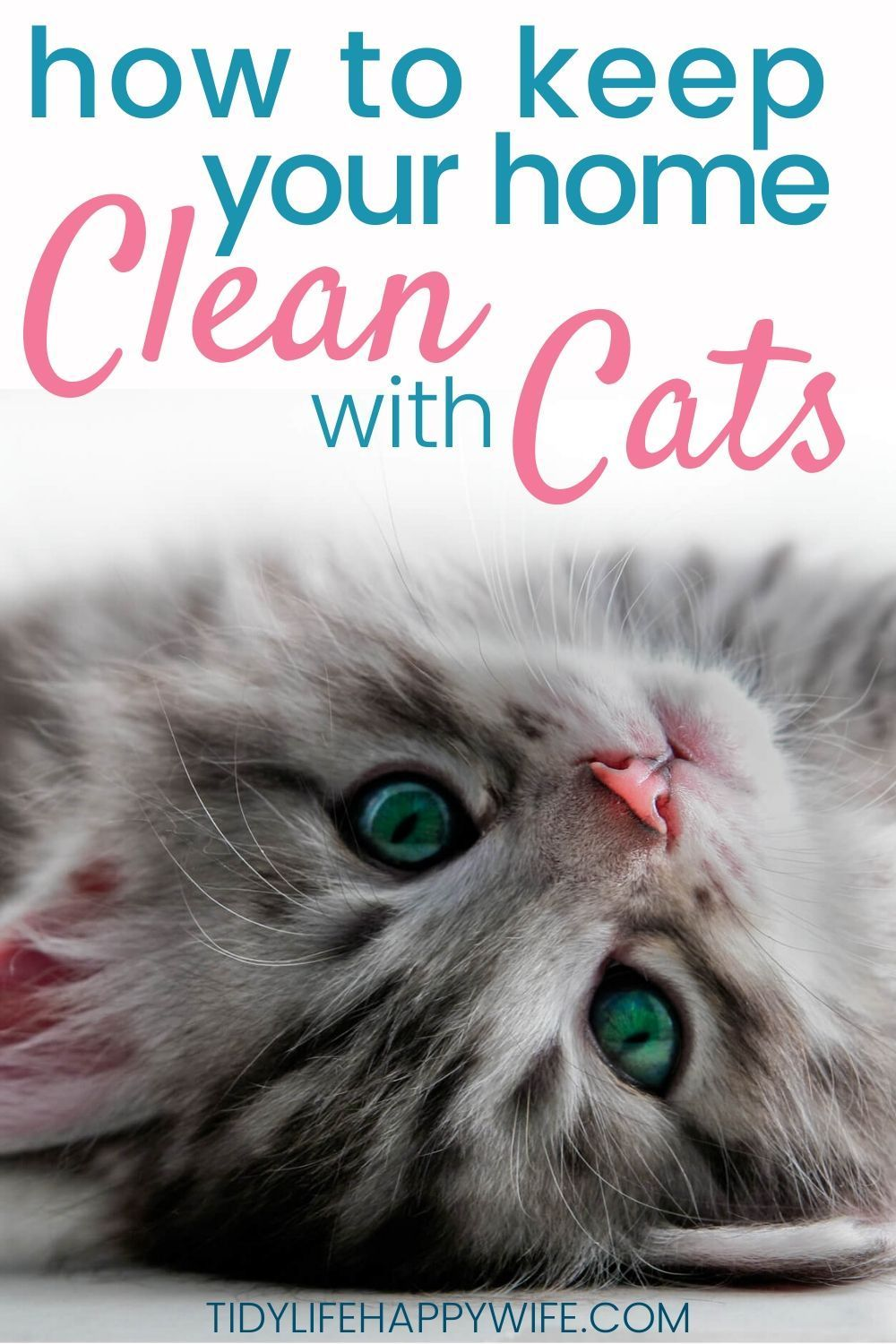 How To Keep Your House Clean With Cats In 2020 Clean House Kitten Cleaning Cat Hacks