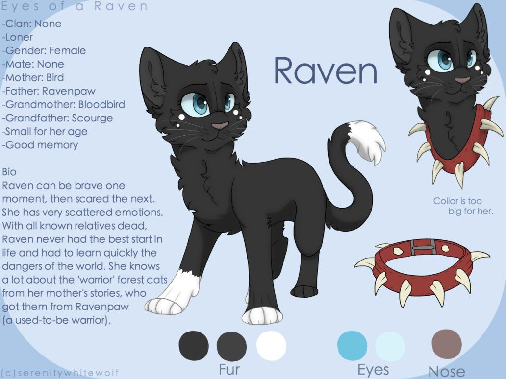 Raven Reference Sheet Redo By Paintedserenity Warrior Cats