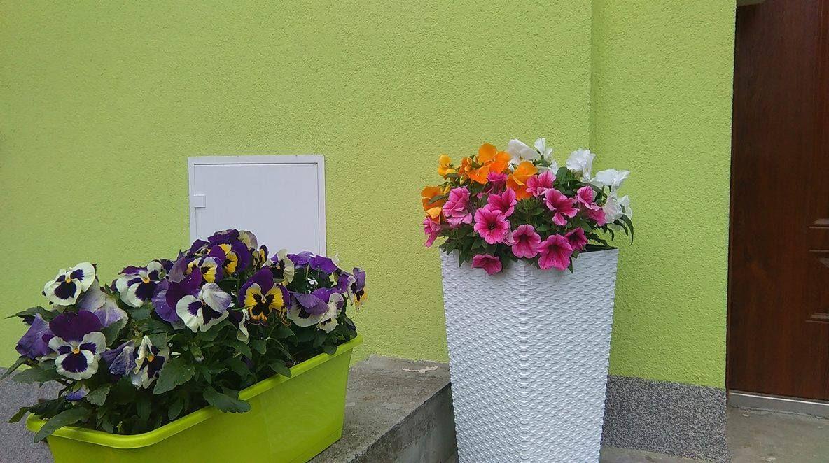 Wiosenny Pomysl Na Dekoracje Wejscia Do Domu Hydrobox Hydroboxpl Bratki Surfinie Petunie Pelargonie Kwiaty Dekoracje Ideas Pomysly Diy Flower Plants