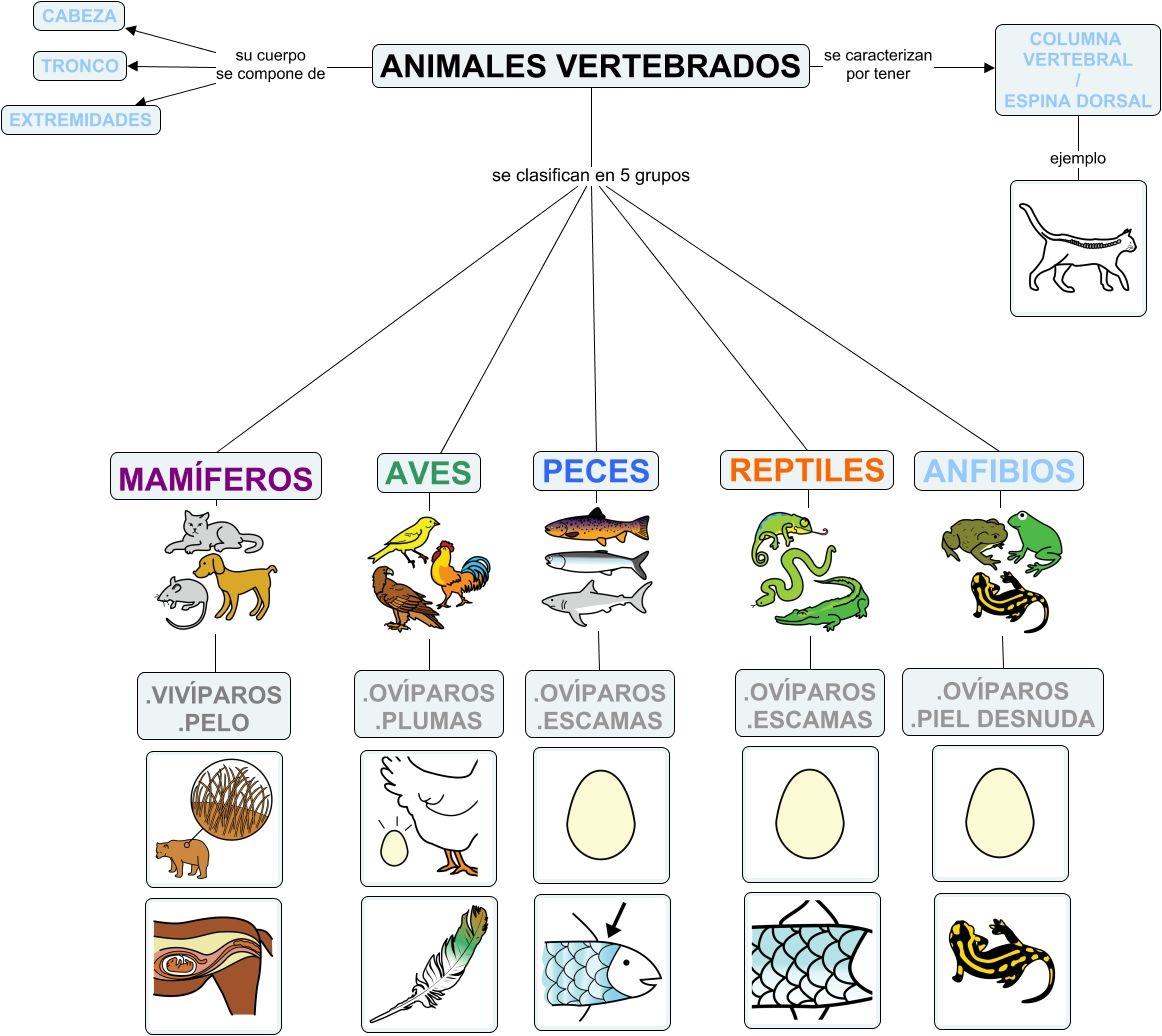 ANIMALES VERTEBRADOS MAPA CONCEPTUAL - CLASIFICACIÓN DE LOS ANIMALES ...