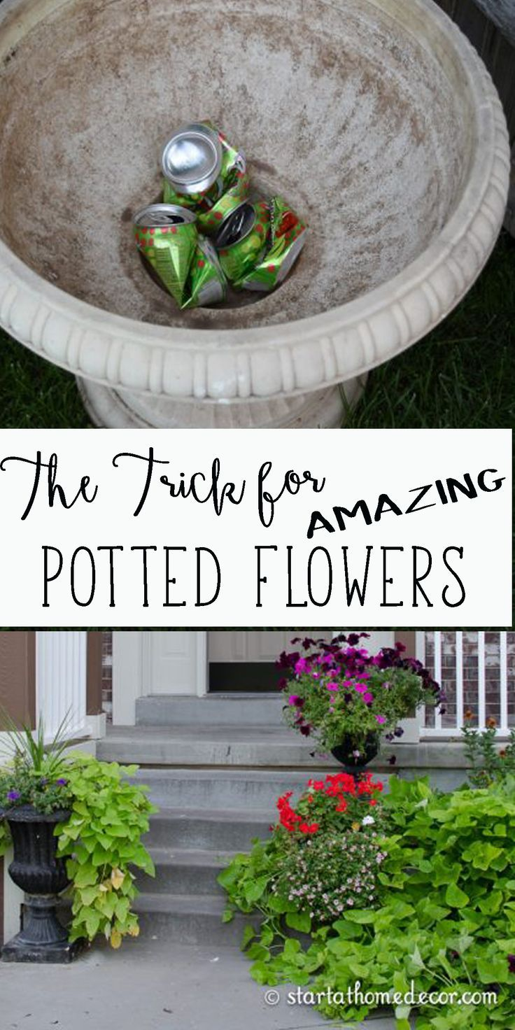 Beginners Guide for Planting Flower Pots - Start at Home Decor