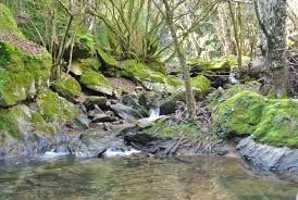Resultado de imagen para arroyos de agua bonitos