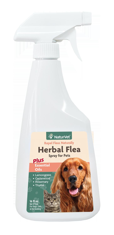 Herbal Flea Spray For Pets Flea Spray For Dogs Flea Spray Essential Oils Dogs