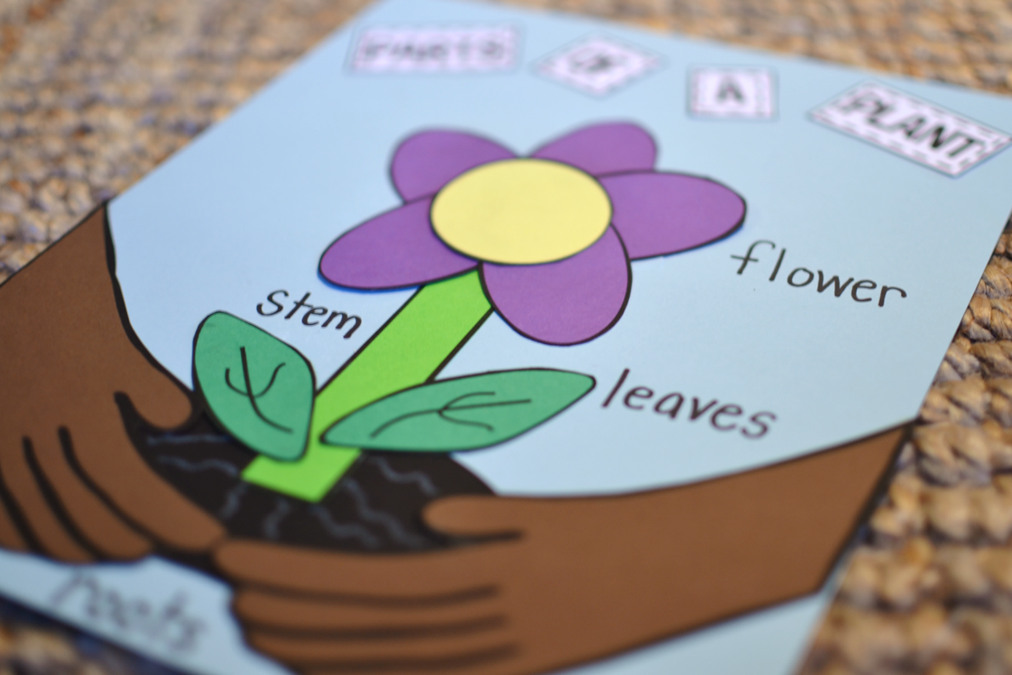plant craft.....a great activity to assess students' understanding of the parts of a plant