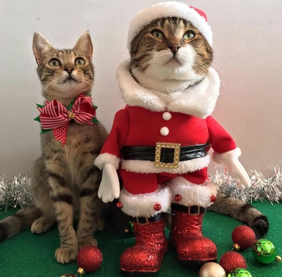 новые прикольные картинки котов весьма