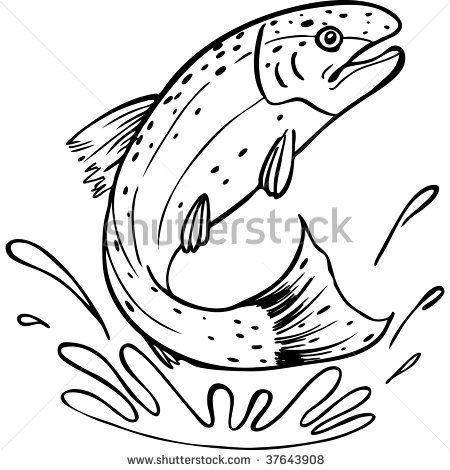 Rainbow Trout Pictures Free Trout Line Art Stock Photo 37643908