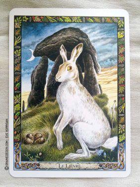 L Oracle Des Druides De Philip Et Stephanie Carr Gomm Lievre Animaux Tarot