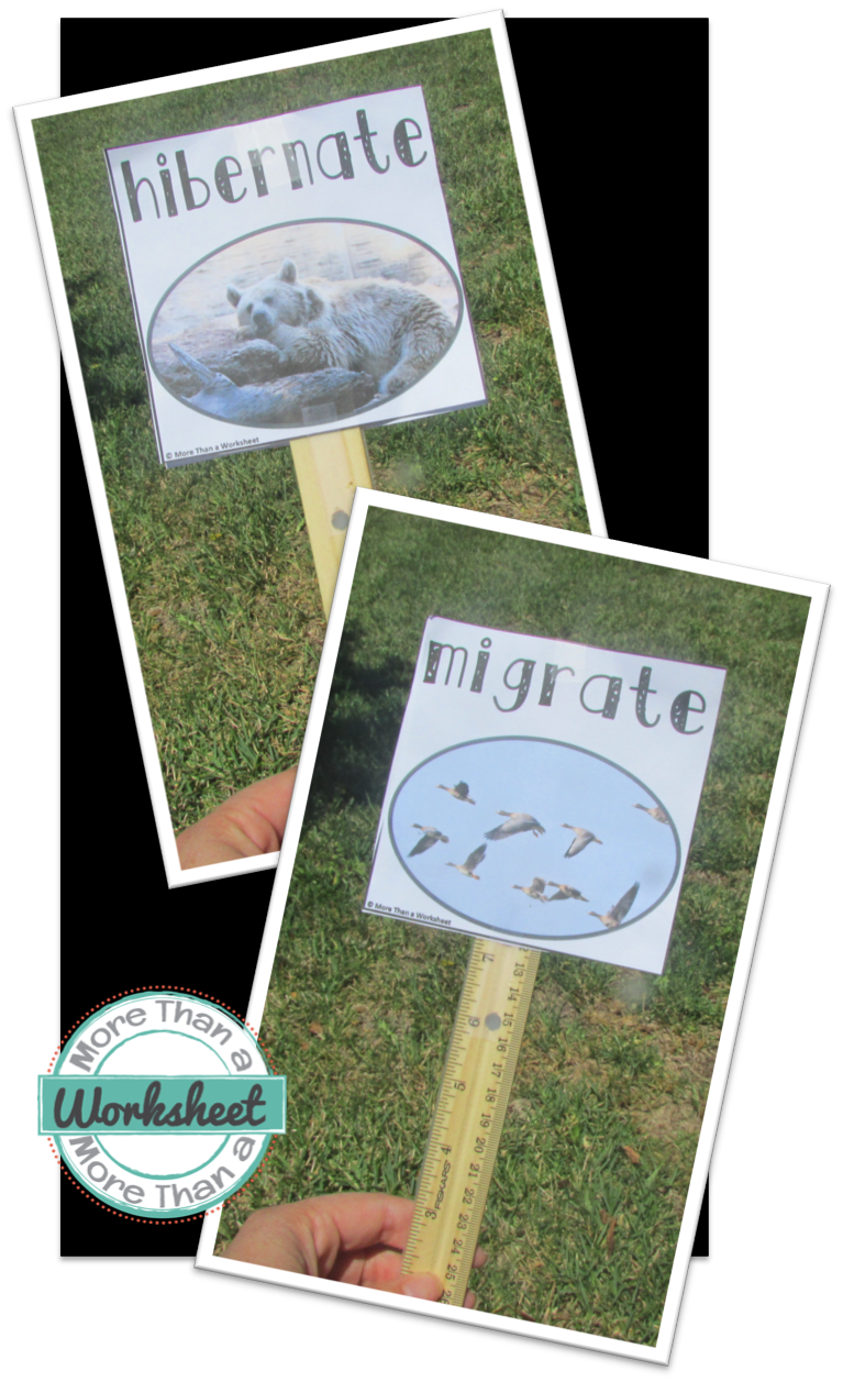 Migrate Hibernate A Simple Science Game To Get Your Students Moving More Than A Worksheet Science Games Preschool Science Kindergarten Science [ 1257 x 767 Pixel ]