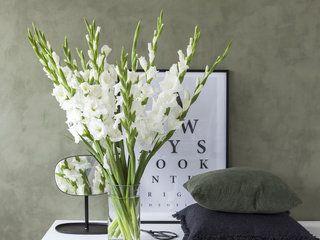 Pynt med staselige og vakre gladioler