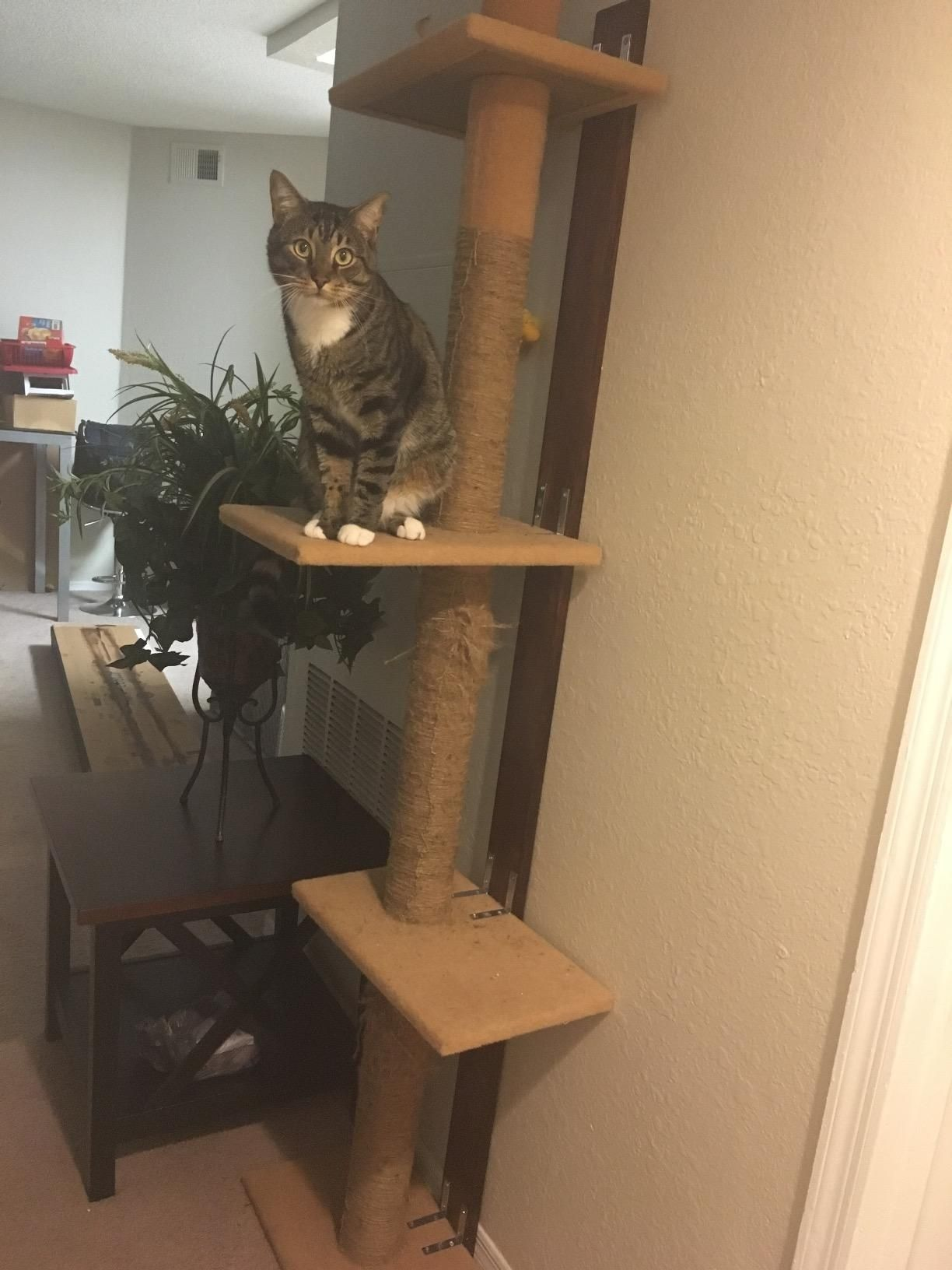 Cat Craft 12400301chcom Three Tier Floor To Ceiling Tree Charcoal Pet Supplies