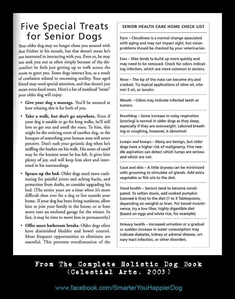 Special things to do for Senior dogs