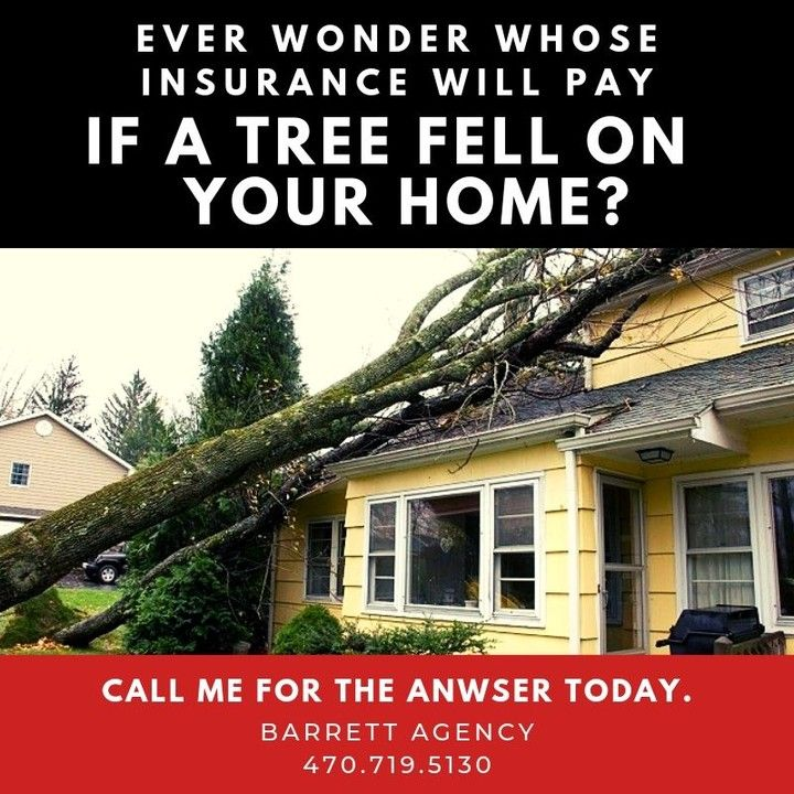 Ever wonder whose insurance will pay if a tree fell on