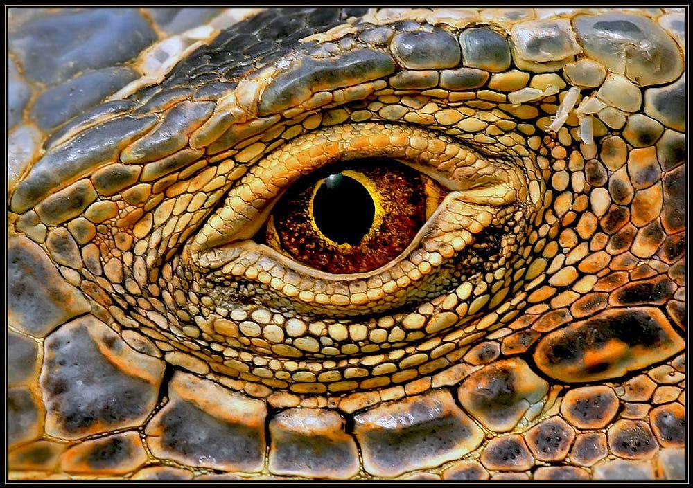 Dragon eye by Klaus Wiese on 500px
