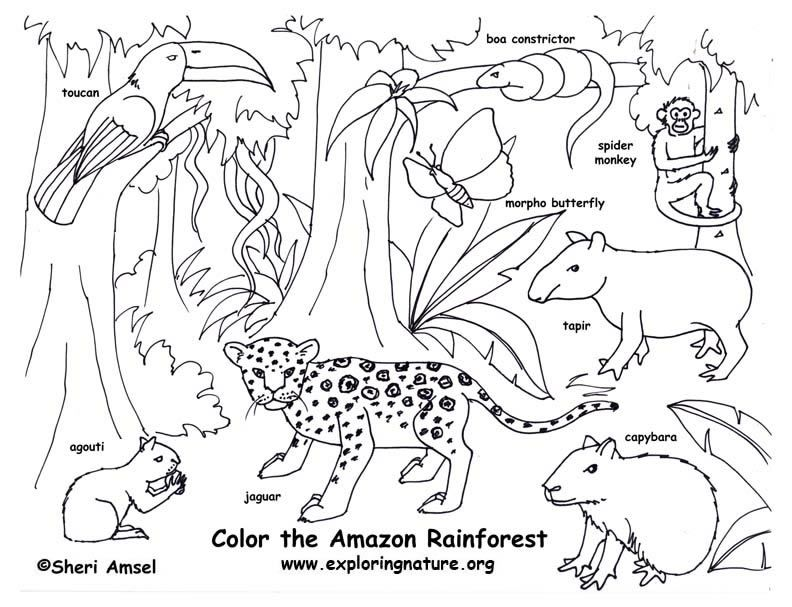 rainforest color pictures | rainforest (amazon) coloring page ... - Rainforest Insects Coloring Pages