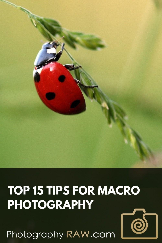 Photo of Top 15 Tips for Macro Photography #Macro #pho