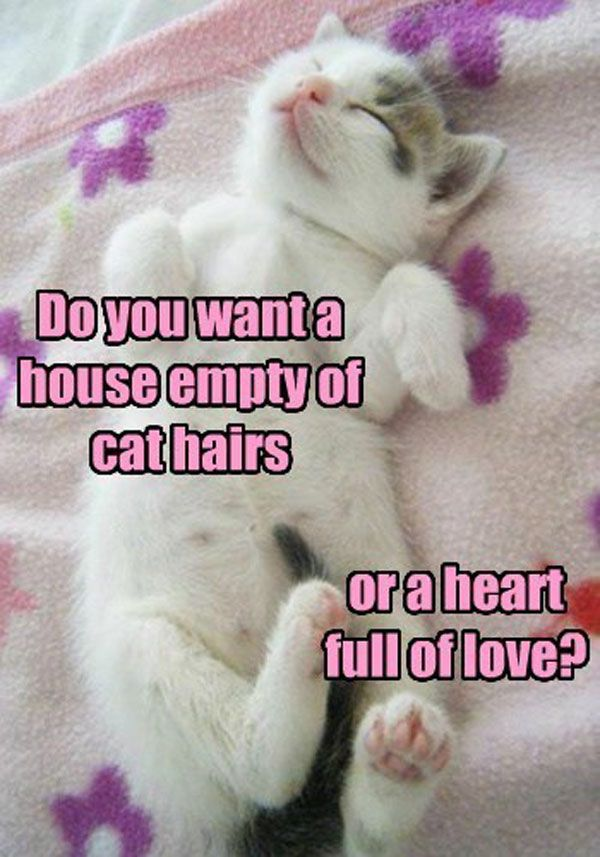 Cute Animals Cats Funny Cat Memes Silly Cats