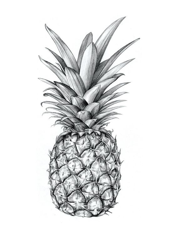 Pineapple Art Print Charline S V Room Pinea