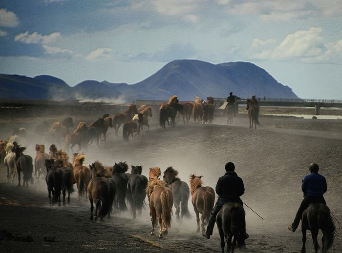 Herd-riding in Iceland - Extreme Sport