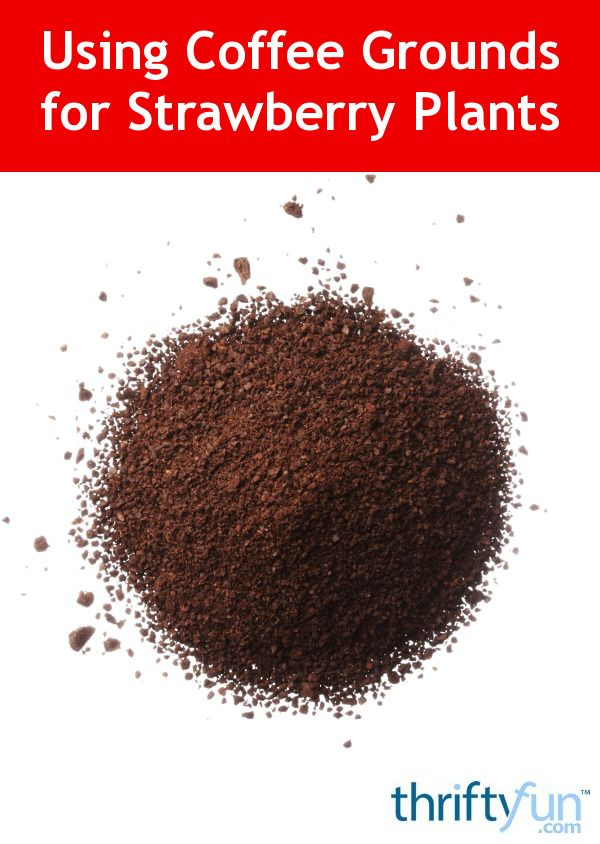 Using Coffee Grounds For Strawberry Plants Strawberry Plants Coffee Grounds For Plants Growing Strawberries In Containers