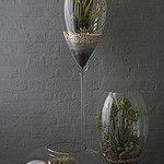 Desert Terrarium Grouping 2 작성자 Ken Marten