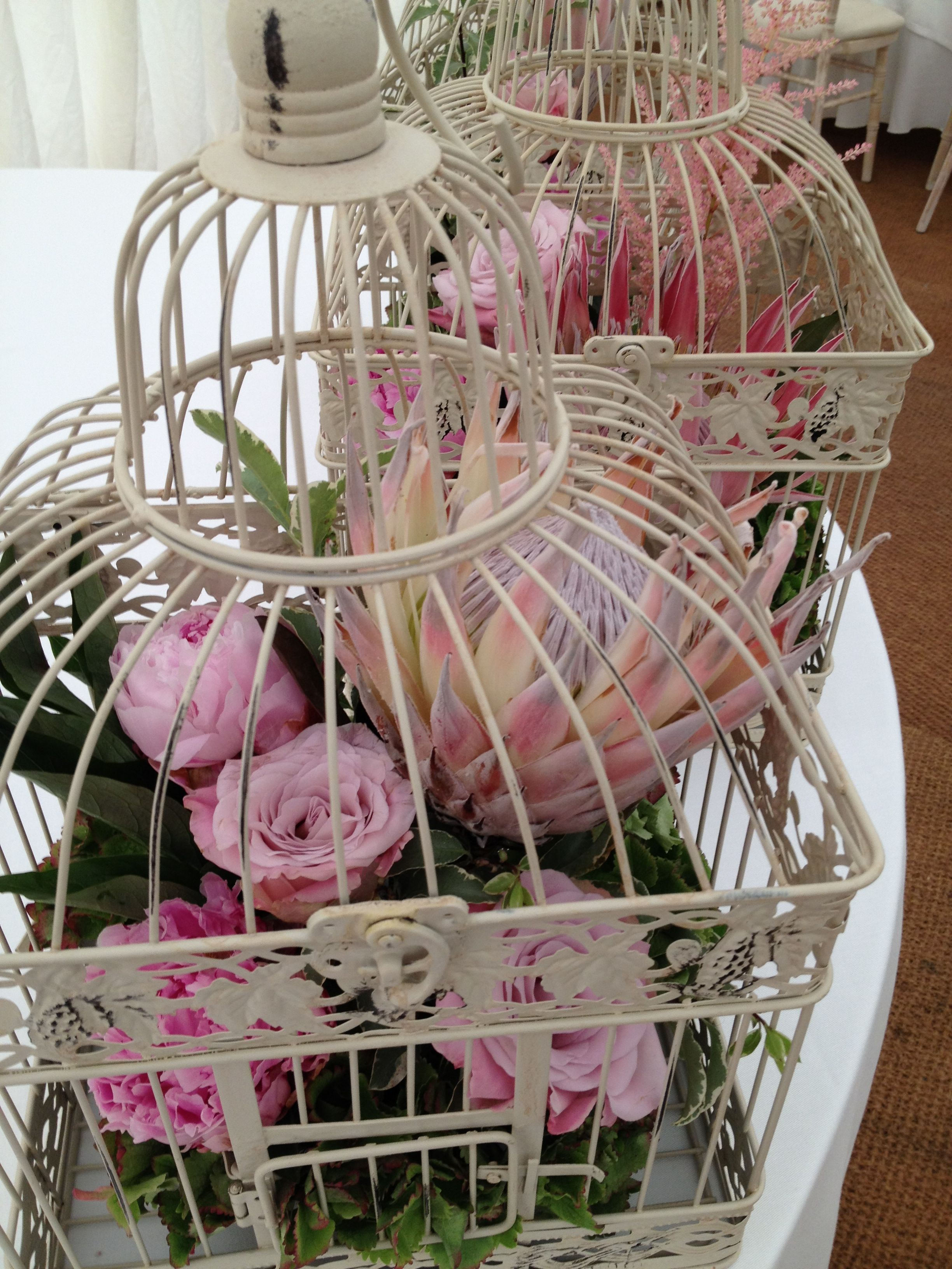 Cute Pink Roses Enclosed In A Bird Cage Are Made