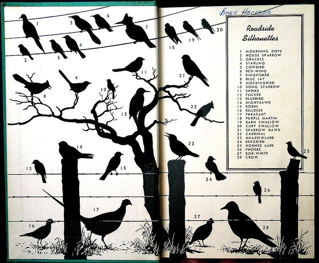 """the inside cover of """"a field guide to the birds"""" (peterson 1934)"""