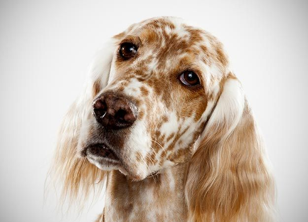 How To Choose A Dog Dog Breed Selector Dog Breeds Pictures
