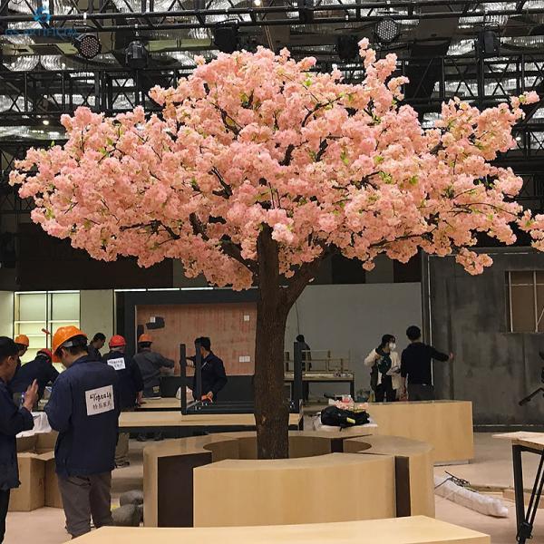 Umbrella Like Pink Cherry Blossom Tree With Dense Flowers Cherry Blossom Tree Blossom Trees Pink Cherry Blossom Tree