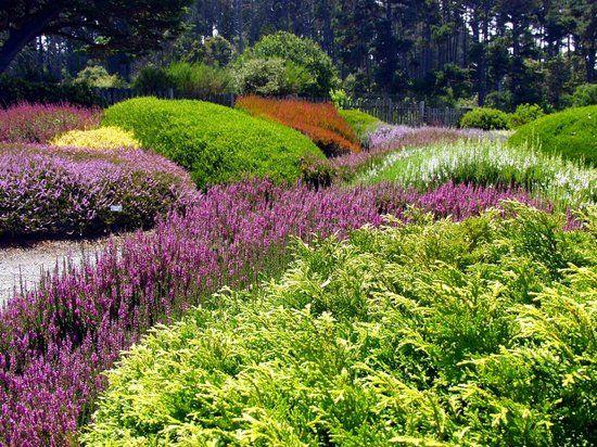 Photo Of Mendocino Coast Botanical Gardens. California ...