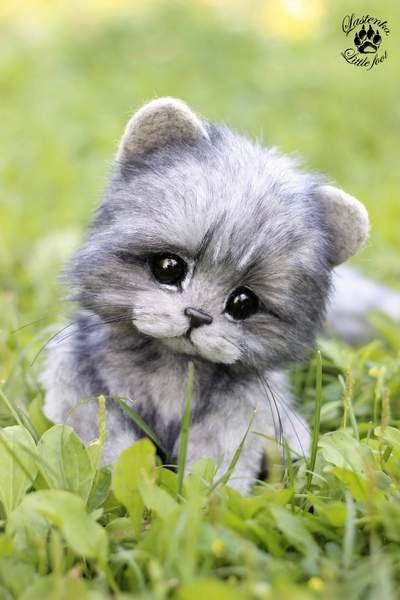 Kitten Aimee By Evgeniya and Igor Krasnov - Bear Pile