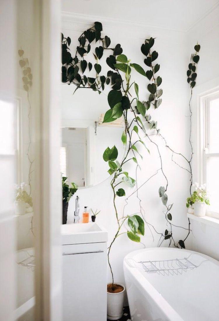 My Scandinavian Home Bathroom With A Climbing Plant Home Decor