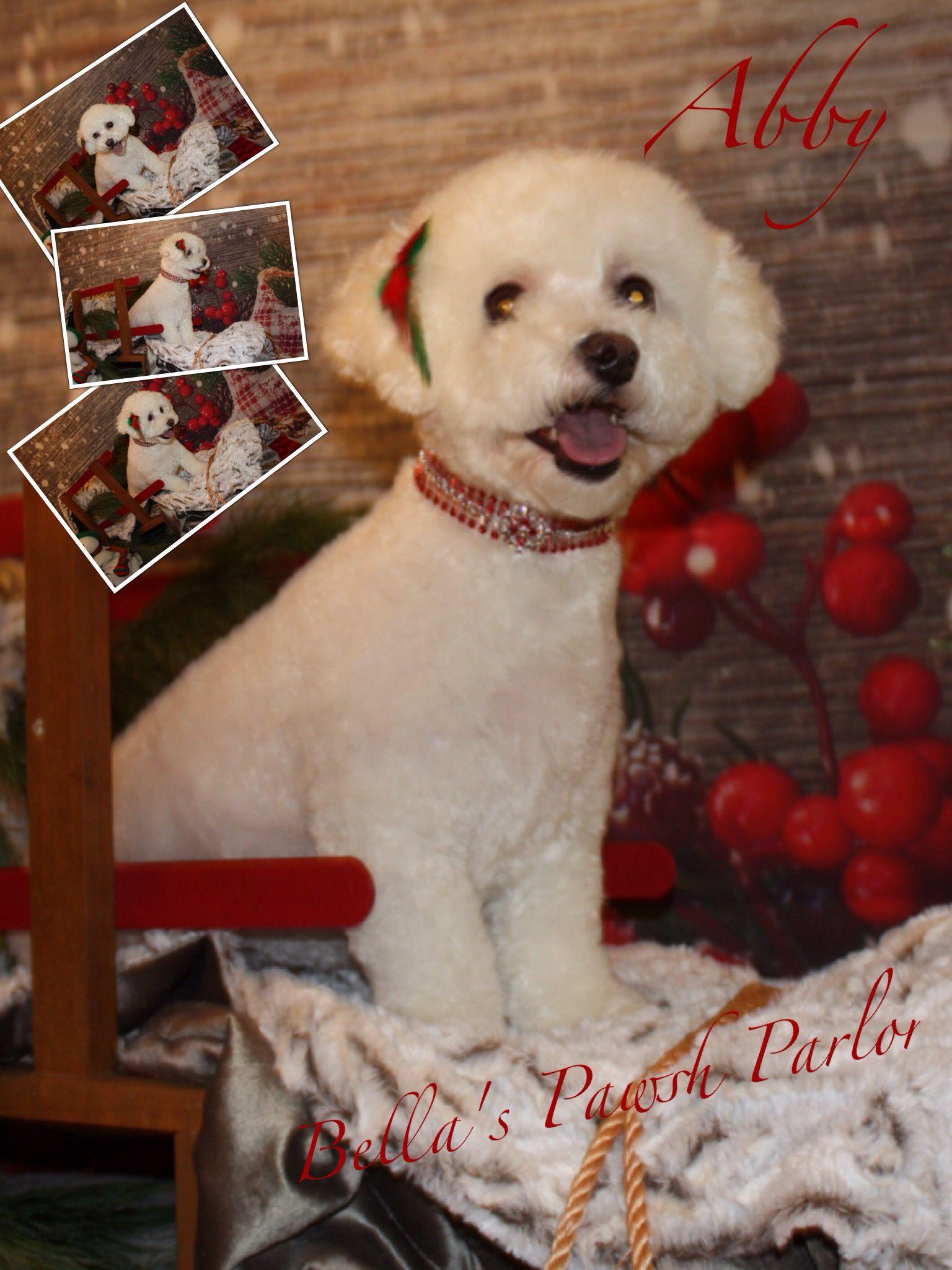 Bella S Pawsh Parlor With Images Labrador Retriever Labrador Dogs