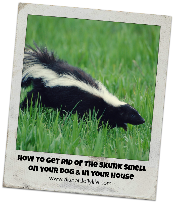 How to get rid of the skunk smell in your house on your