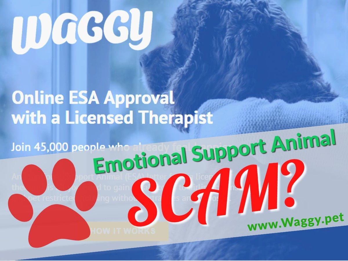 Emotional Support Animal Letter from Waggy.pet Emotional