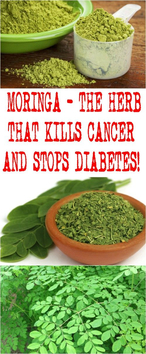 Image result for Moringa, The New Food For Diabetes?