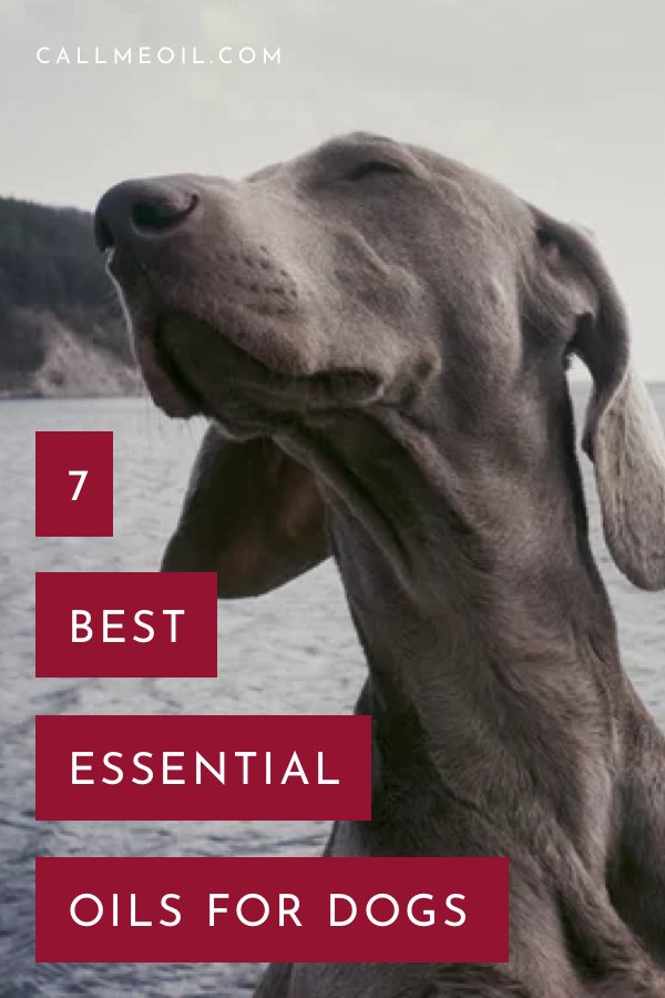 Best Organic Essential Oils 2019 7 Best Essential Oils For Dogs & Their Reviews (Updated 2019