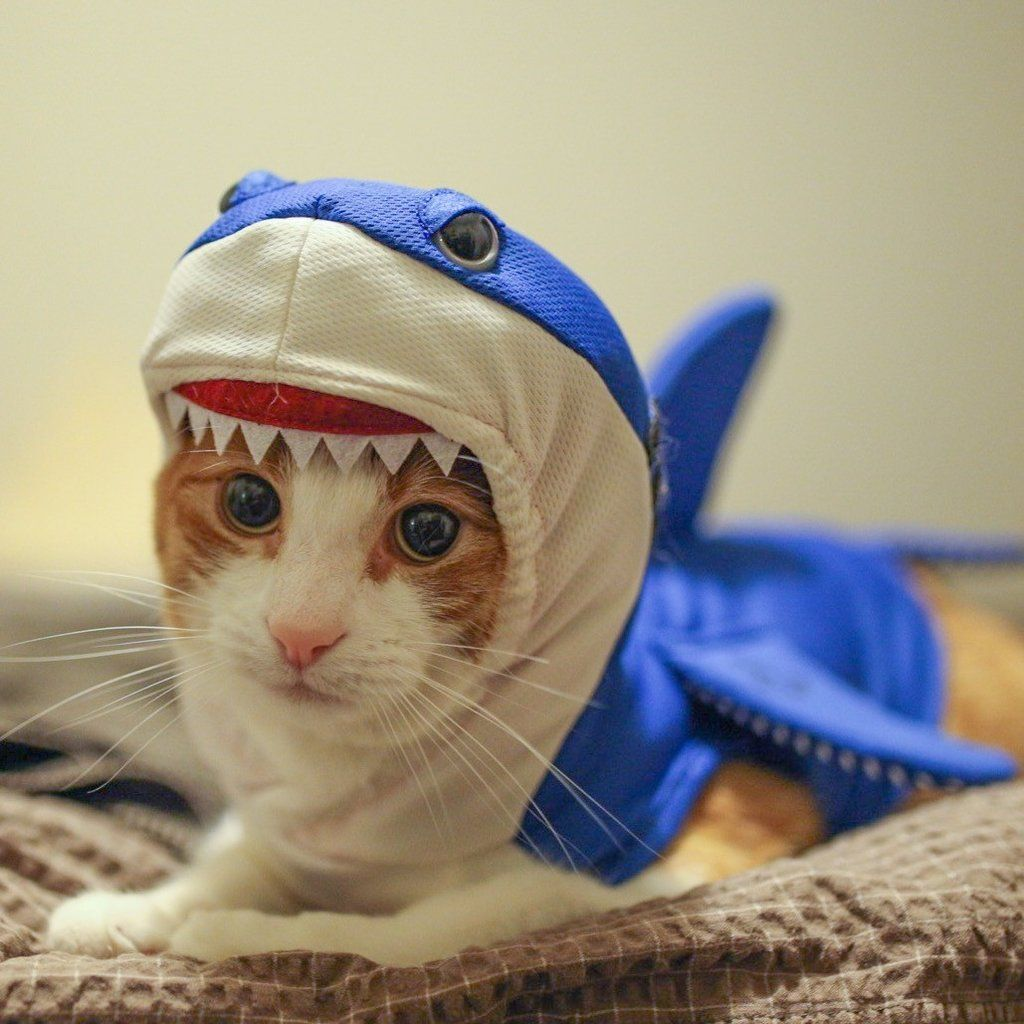 Fearsome and cute shark costume. Cool and easy dry fabric