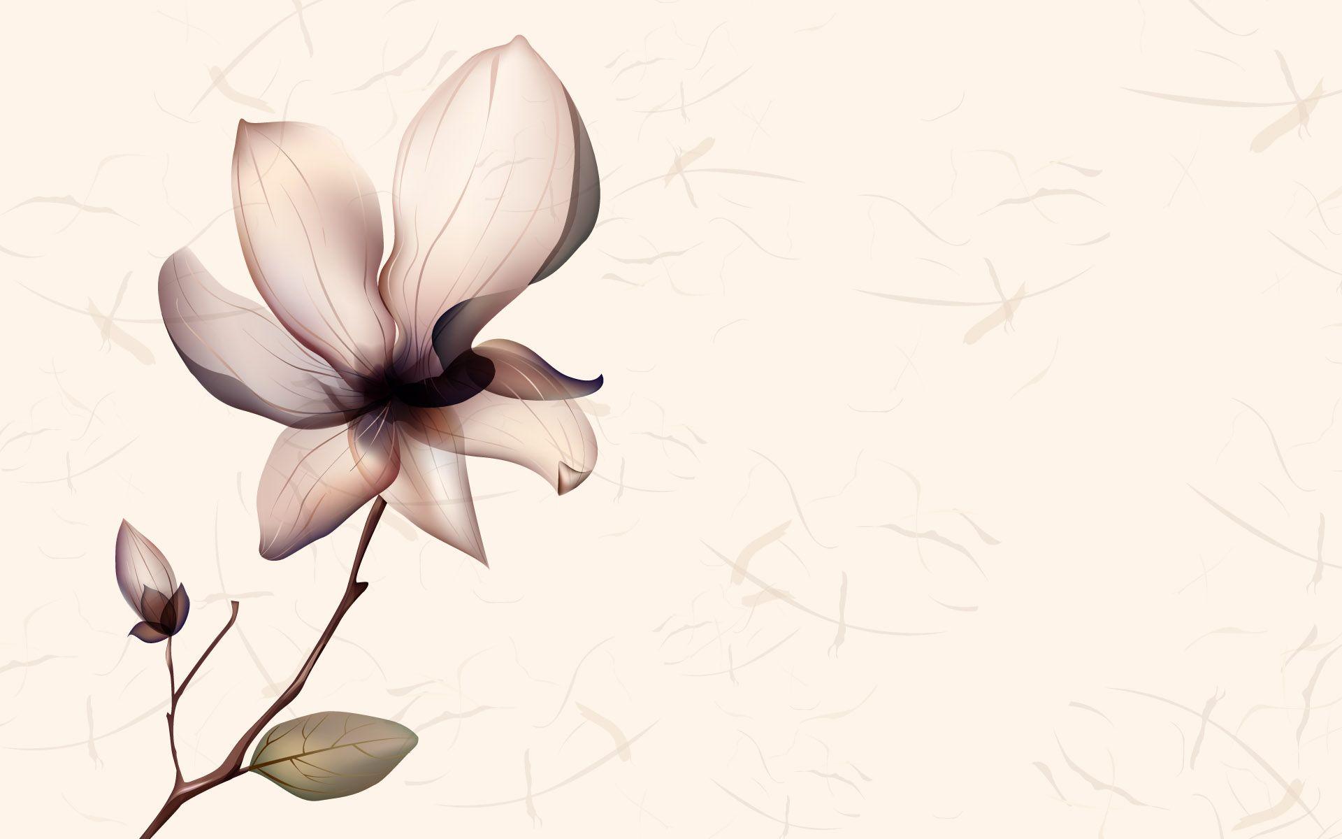Background wallpaper white flower desktop white color pinterest background wallpaper white flower desktop mightylinksfo Images
