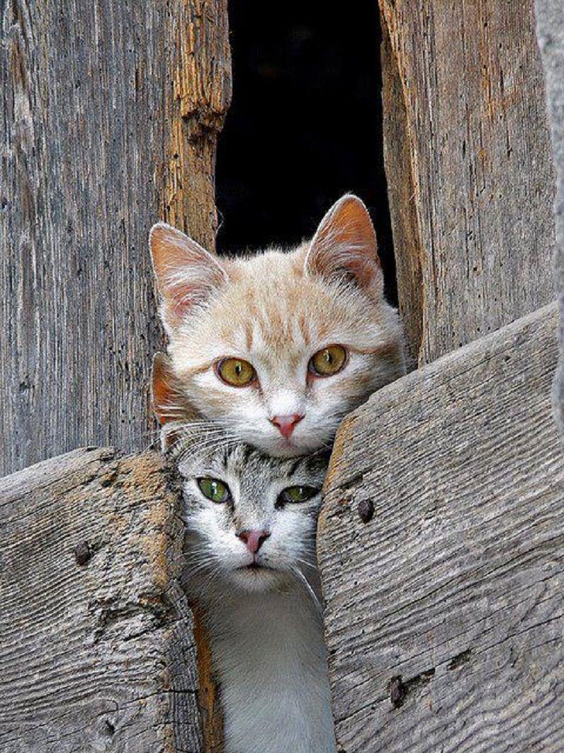 Pin De Lourdes Mir Sallent En Animales Gatos Bonitos Gatos