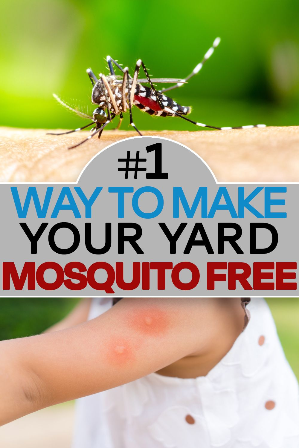 Eliminate mosquitoes fast in 2020 mosquito diy mosquito